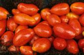 PlumTomatoes[1].jpg